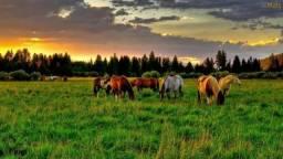 Velleda oferece 70 hectares 8 km da RS040, aproveita 100%