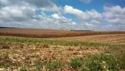 São Mateus do Sul - 160 Alqueires - 387,2 Hectares - Planta 60%