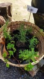 Horta hortaliças alecrim lavanda hortelã