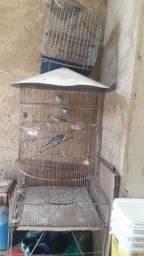 Viveiro Para Pássaros + Gaiola Grande - Honório Gurgel