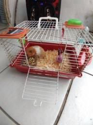 2 gaiolas e 3 Hamsters