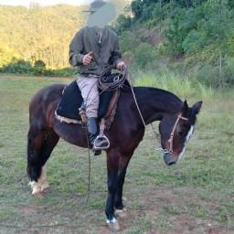 Vendo egua criola