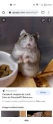 Temos hamster anão filhotes.