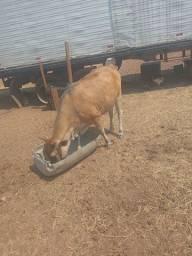 Título do anúncio: Vendo boi e vaca