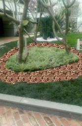 Projetos paisagístico e manutenção de jardim