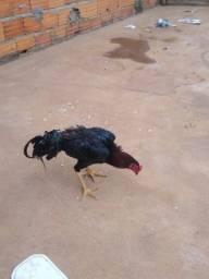 Vendo frango índio