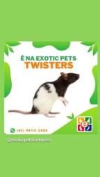Título do anúncio: Twister Promoção
