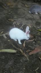 Título do anúncio: Coelha femea