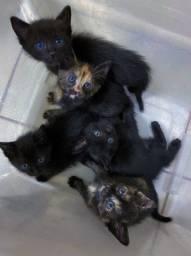 Gatinhos para adoção!!! Infelizmente nao posso cuidar e precisam de lar!!!