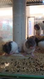 Hamster Twister