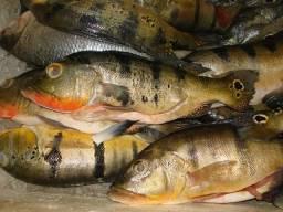 Vende-se peixes direto de Três Marias