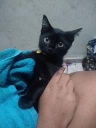 Título do anúncio: Adotar gato filhote fêmea manço