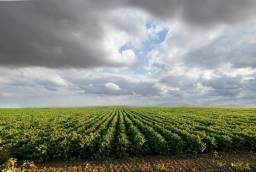 Arrendamento 460 hectares ha Pr em Lavouras Pr