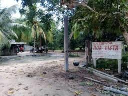 VENDA| Fazenda com pasto no Município de Prainha