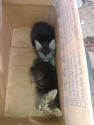 Doa se dois gatinho macho