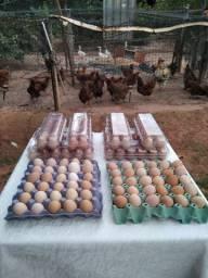 Ovos caipiras fresco Araçatuba 8 reais dúzia
