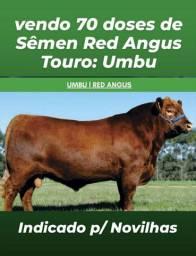 Sêmen Red Angus