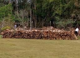 Madeira eucalipto para lenha