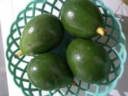 Vendem-se abacates