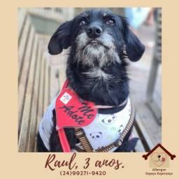 Título do anúncio: Cachorro cão adoção responsável Raul