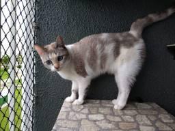 Selena - Gatinha P/ Adoção Responsável, +/- 2 anos, Castrada e Vacinada