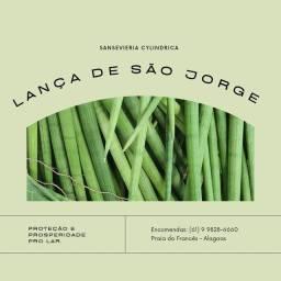 Promoção R$ 5,00 por unidade Lança de São Jorge