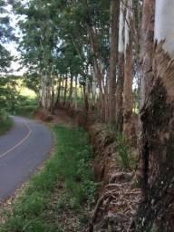Vendo 85 árvore de eucalipto com 40anos!!facil retirada!!