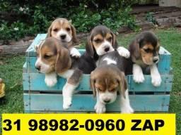 Canil-Filhotes Beagle Basset Bulldog Pug Yorkshire Shihtzu Lhasa Poodle Maltês