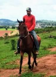 Vendo cavalo manga larga marchador