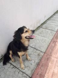 Cachorrinho para adoção