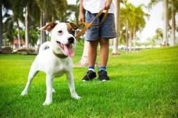 Título do anúncio:  Passeamos com seu cachorro