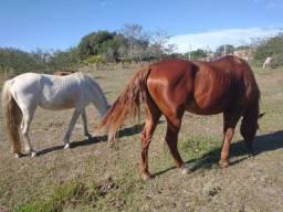 Título do anúncio: Égua e cavalo