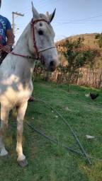 Título do anúncio:  Cavalo Manga Larga 5 anos de idade.