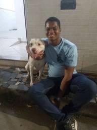 Título do anúncio: Adestramento Canino E Cosultoria Comportamental