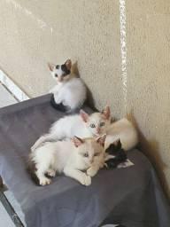 gatinhos machos adoção ENTREGO EM VG