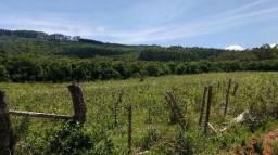 137 hectares de campo para pecuária e soja