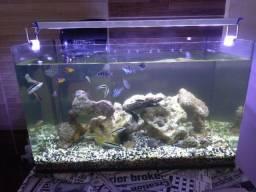 Aquário marinho com luminária,rochas peixes