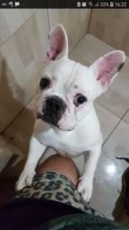 Vendo Bulldog Francês Macho