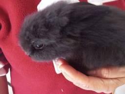 Vendo filhotes de coelho