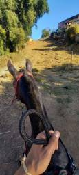 Título do anúncio: Cavalo 2 anos e 7 meses