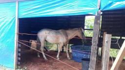 Vendo esse lindo  cavalo bom pra crianças e fazendas