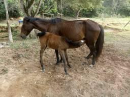 Um égua com um potrinho de 1 mes mansa