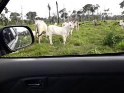 40 hectares no Porto Alonso