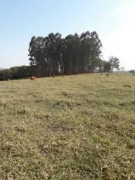 Fazenda 42 hectares