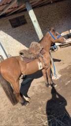 Título do anúncio: Cavalo crioulo capado