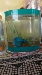 Bettas Mais aquário mais ração