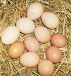 Ovos de galinha capoeira