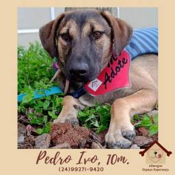 Título do anúncio: Cachorro cão adoção responsável