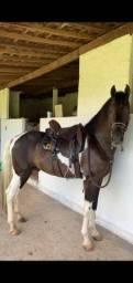 Vendo cavalo mangalarga puro