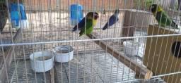 Animais 4 por 300 reais